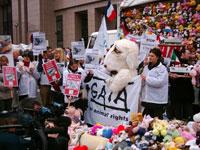 Tierschützer protestieren in Brüssel gegen Tiertransporte