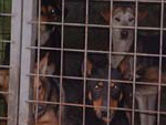 Hunde in Nitra, Slowakei benötigen dringend Hilfe!