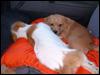Vermittlung der Hunde. Wer kann helfen?
