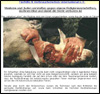 tierlieb.net-Linktipp zum Thema Schächten: Tierhilfe und Verbraucherschutz international. Themen: z.B. verschiedene Videos vom rituellen Schächten; Unterschrifts-Liste gegen Schächten; Korangesetze; Religions-Vorschriften; Schächtungen in München; Schächtfleisch im freien Handel: Opferfest und Schlachtopfer