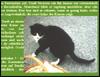 Patenschaften für Katzen übernehmen - Helfen Sie den halbwilden Tieren