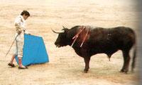 Stiere sind farbenblind (Quelle: Eva Heller, Wie Farben wirken)