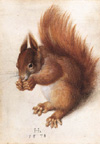 HOFFMANN, Hans: Squirrel, 1578. Watercolour and gouache on parchment, 25,1 x 17,7 cm. National Gallery of Art, Washington.