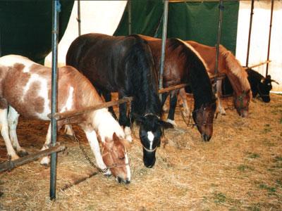 Die Nacht der Pferde wird in