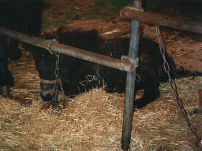 Tierdach De Gastseite Zirkusleben Für Pferde Ein Leben In